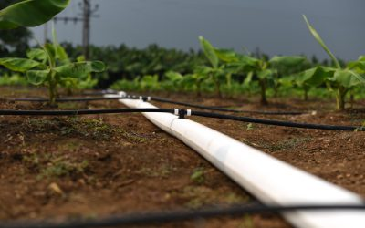 Netafim India launches FlexNet™ to boost next generation farming in India